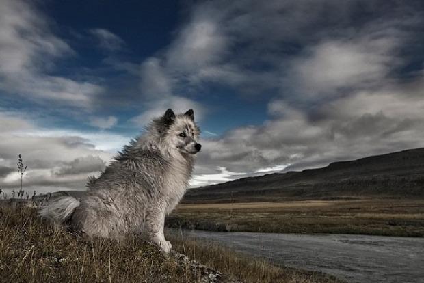 Beautiful-animals-photographu-stumbleupon-121