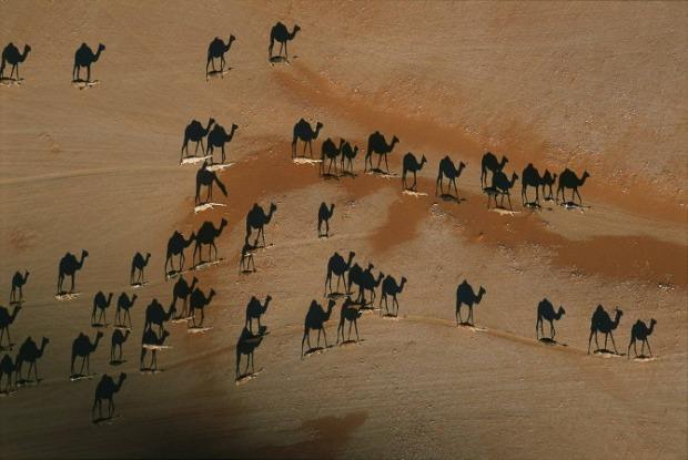 Beautiful-animals-photographu-stumbleupon-152