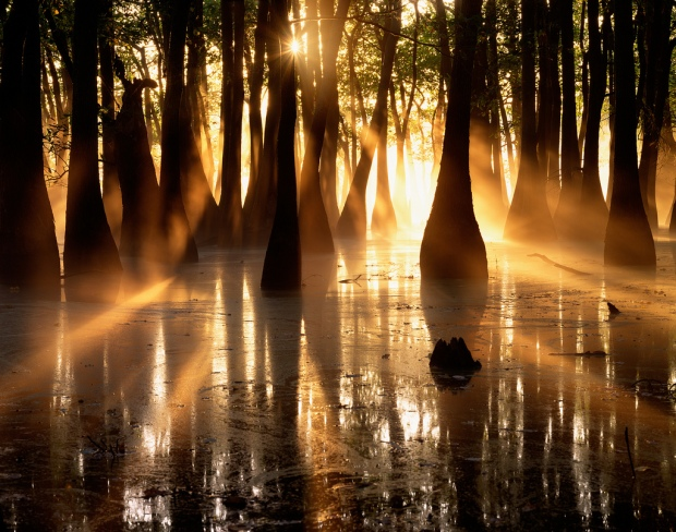 Cypress & Tupelo silhouettes - Horseshoe Lake.Illinois