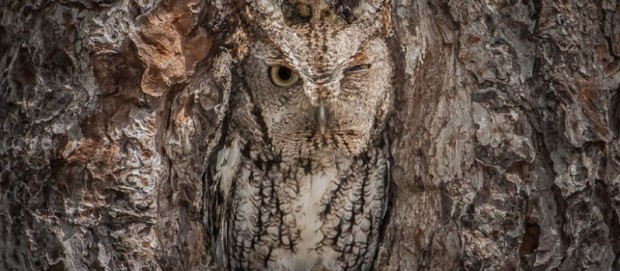 Owl_camouflage_nature_4-798x350