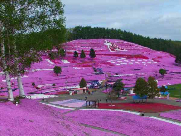 Flower-Park-de-Higashimokoto-4
