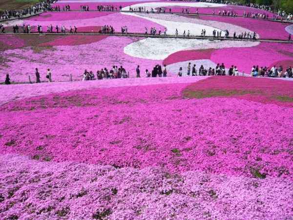 Flower-Park-de-Higashimokoto-7