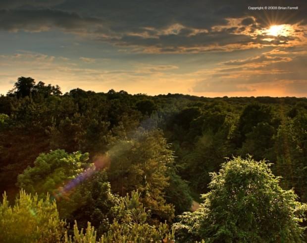 paisajes-de-bosques-001