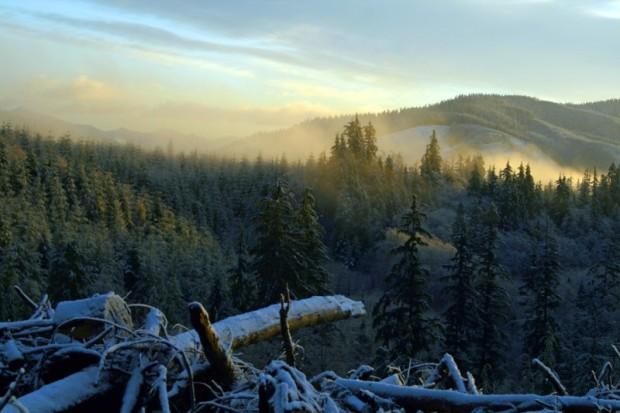 paisajes-de-bosques-008