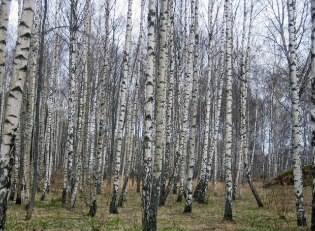 paisajes-de-bosques-013