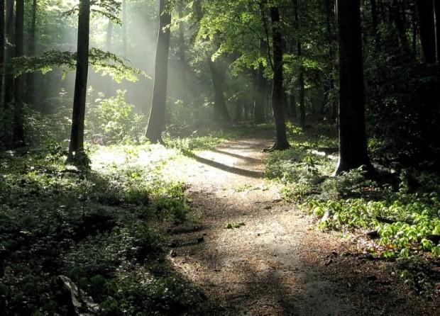 paisajes-de-bosques-014