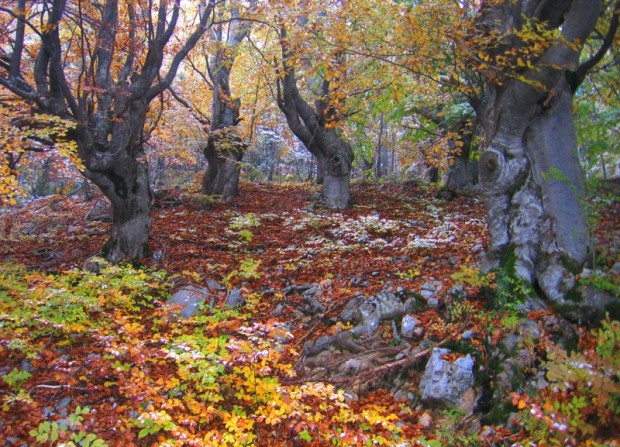 paisajes-de-bosques-020