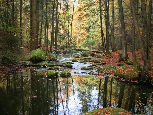 paisajes-de-bosques-021