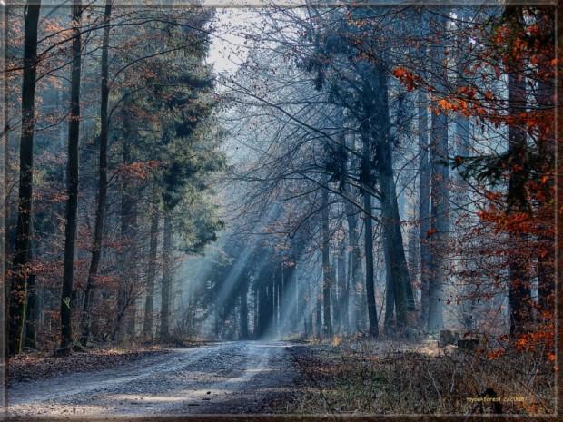 paisajes-de-bosques-023