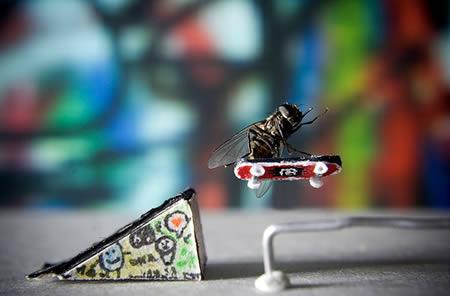 a96986_a607_12-fly