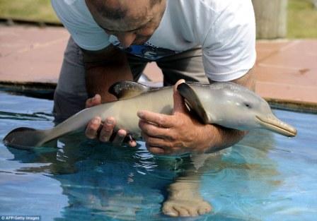 delfin-recien-nacido