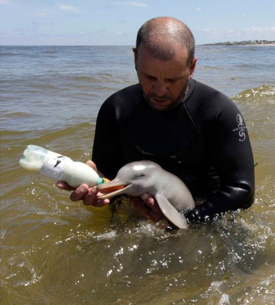 delfin_recien_nacido2
