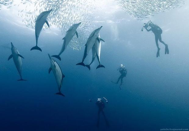 Maravillosas-fotografías-de-la-vida-marina-por-Alexander-Safonov-03