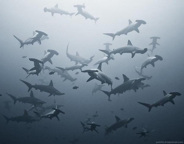 Maravillosas-fotografías-de-la-vida-marina-por-Alexander-Safonov-09