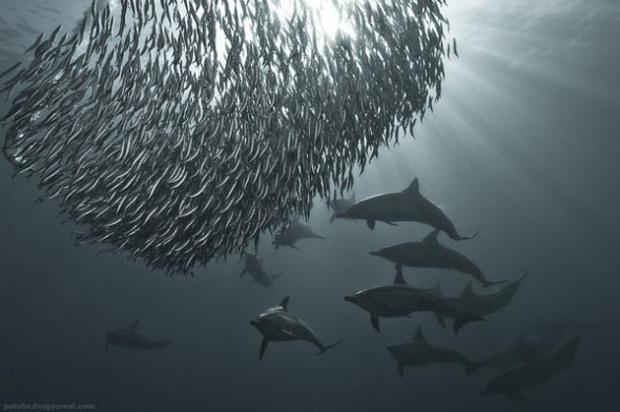 Maravillosas-fotografías-de-la-vida-marina-por-Alexander-Safonov-10