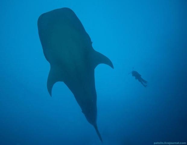 Maravillosas-fotografías-de-la-vida-marina-por-Alexander-Safonov-17