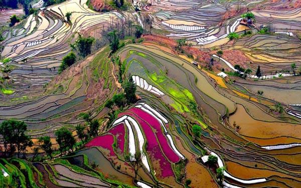 rice-fields-china-enpundit-10