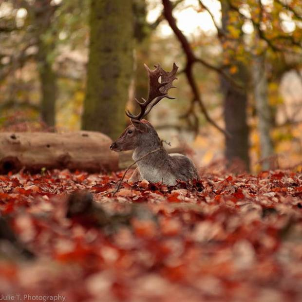25-Most-Beautiful-Animals-Photography-StumbleUpon-141