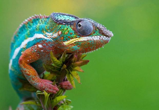 25-Most-Beautiful-Animals-Photography-StumbleUpon-21