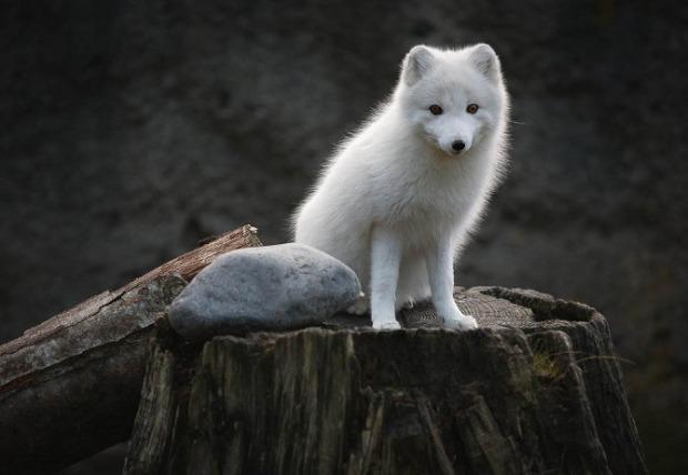 25-Most-Beautiful-Animals-Photography-StumbleUpon-81