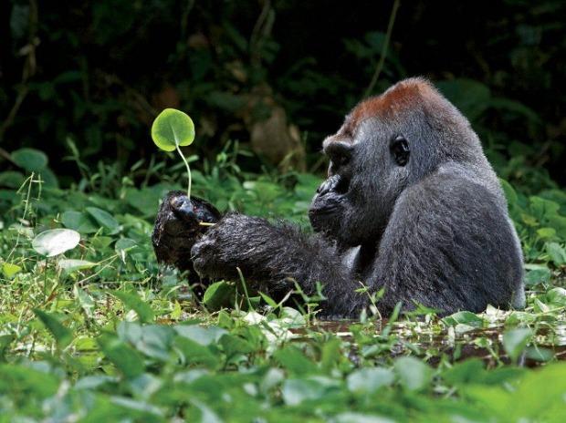 25-Most-Beautiful-Animals-Photography-StumbleUpon-91