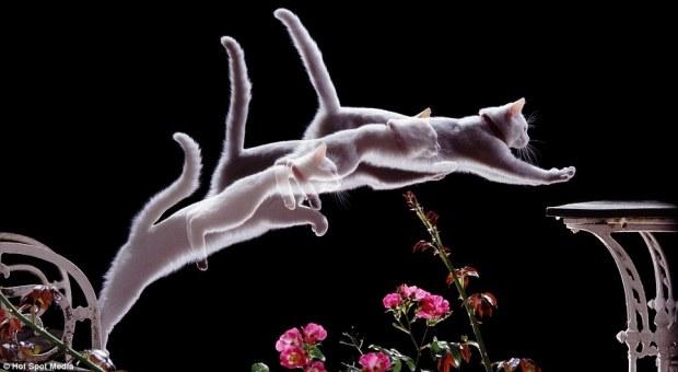gato-camara-lenta