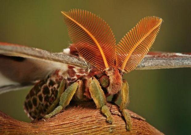 insecto_macro101