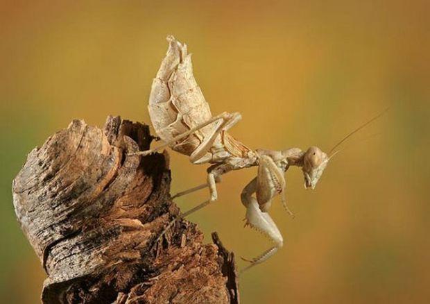 insecto_macro110