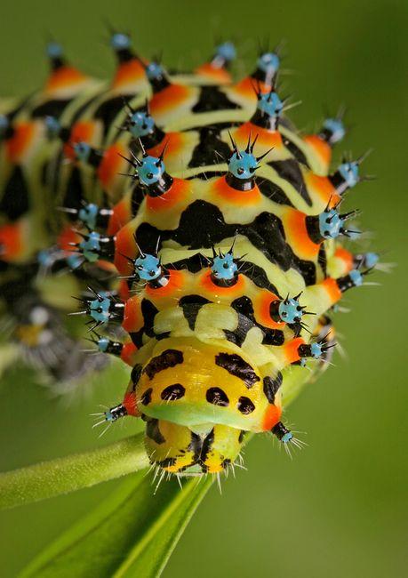 insecto_macro114