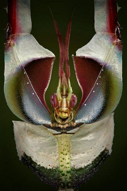 insecto_macro117