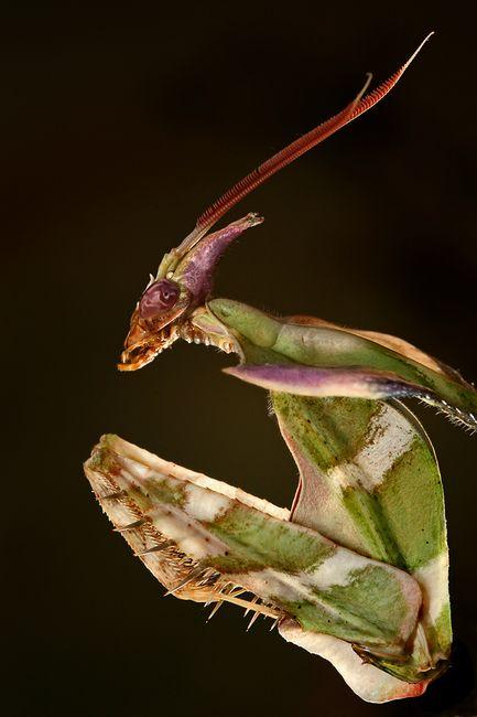 insecto_macro121