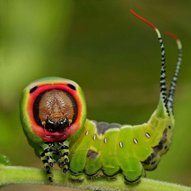 insecto_macro122