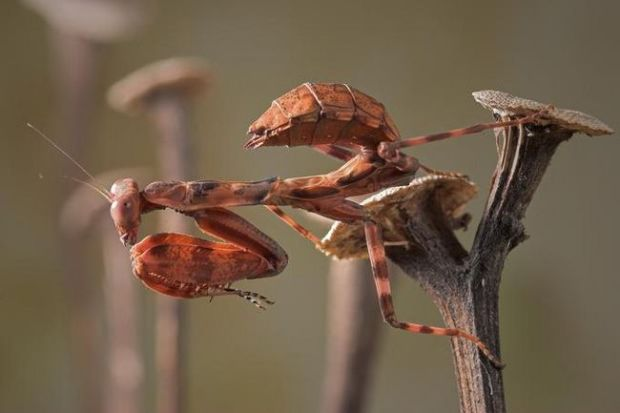 insecto_macro123
