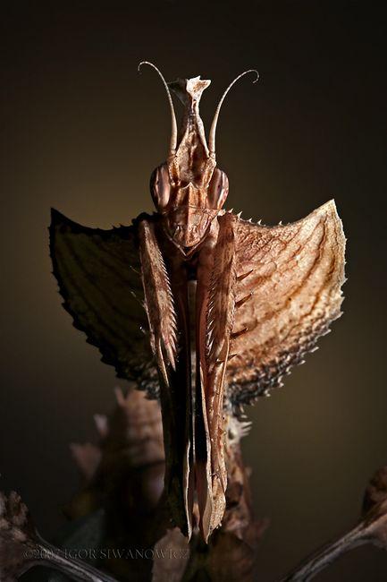 insecto_macro127