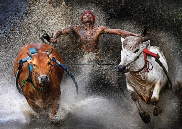 20120212_Bull_race_s1