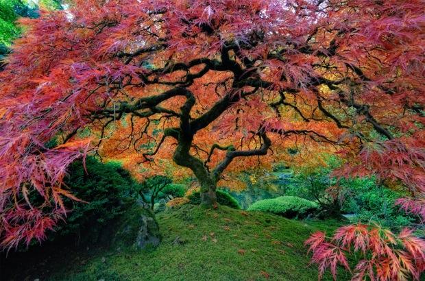 japanese-garden-in-portland
