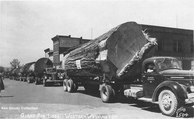 Fotos antiguas de la tala de árboles gigantes 18