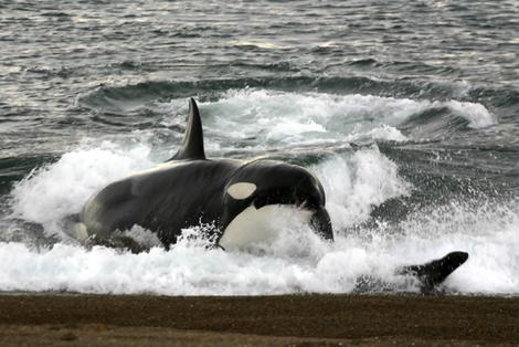 To match feature ARGENTINA-ORCAS/