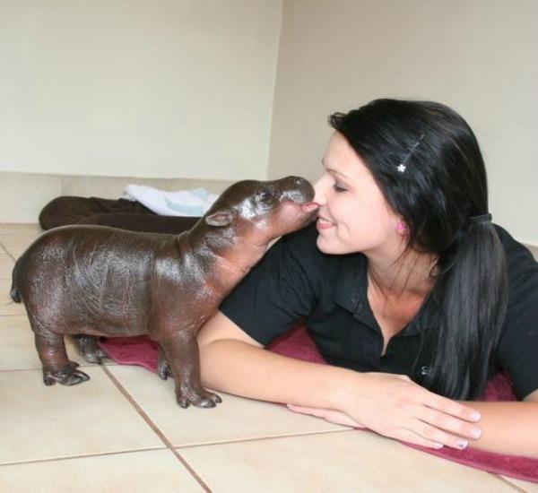 395174_hipopotamo_bebe_20120709190927