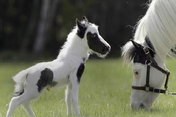 einstein-caballo-pequeno