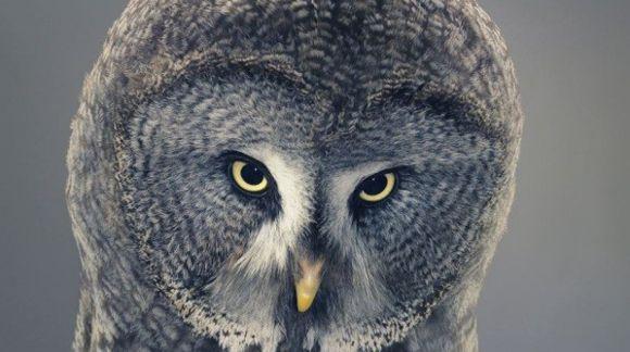 increibles-imagenes-de-criaturas-salvajes