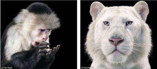 increibles-imagenes-de-criaturas-salvajes11