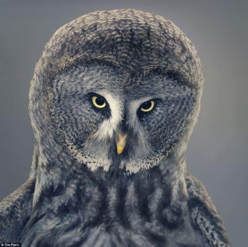 increibles-imagenes-de-criaturas-salvajes4