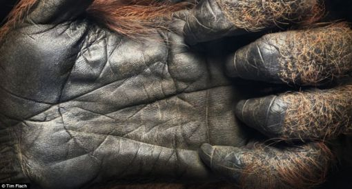 increibles-imagenes-de-criaturas-salvajes9