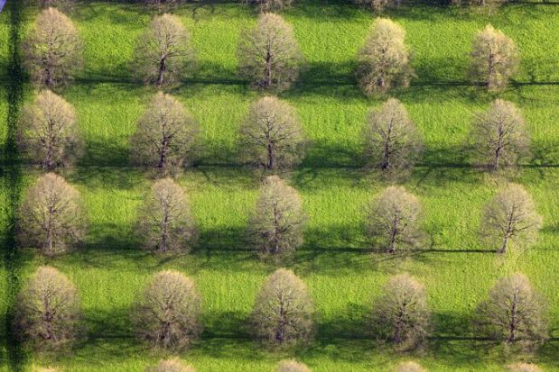 Luftaufnahme von den schattenwerfenden Linden in der Viereckschanze auf dem Friedhof am Perlacher Forst im Süden von München.