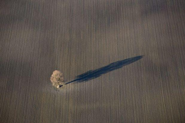 Luftaufnahme von einem Laubbaum in einem Feld, der einen langen Schatten wirft.